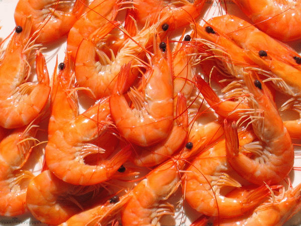 how to cook frozen raw shrimp