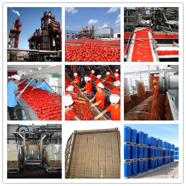 70g to 4500g Different tomato paste can sizes