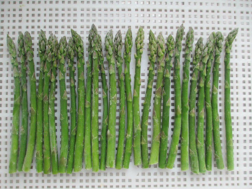 Chinese IQF & Frozen green bean
