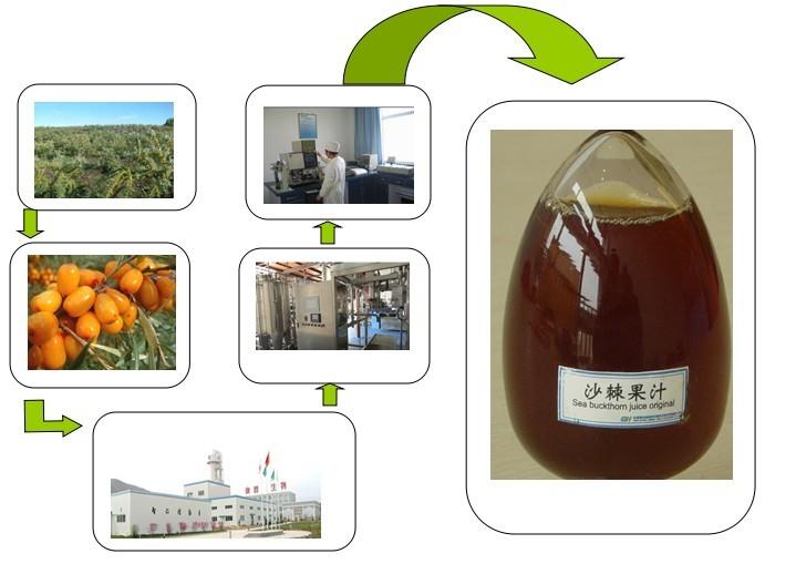 100% Natural Organic Sea Buckthorn Juice from Himalayan supplier since 2002