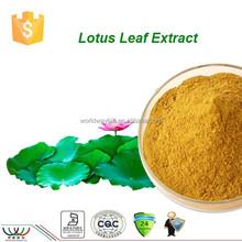 Natural 2% nuciferine lotus leaf extract powder ,HACCP Kosher FDA lotus leaf extract,factory flavones lotus leaf extract