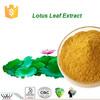 Natural nuciferine lotus leaf extract powder,HACCP Kosher FDA lotus leaf extract,flavones lotus leaf extract