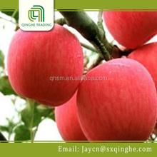 buy fresh fuji apples wholesale