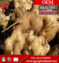 hot sale fresh Ginger price in China for export