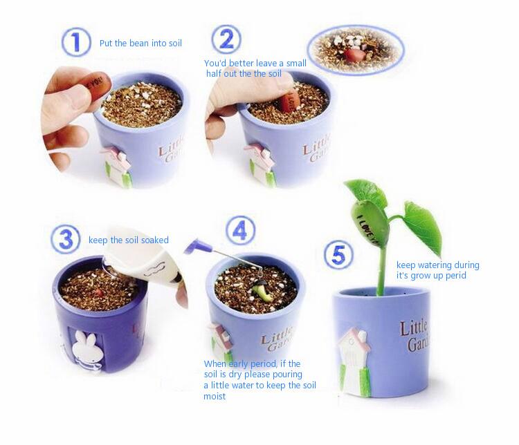 Magic bean use instruction.jpg