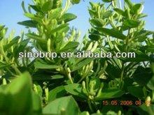 BNP Competitive price GMP certificated Saw Palmetto P. E.--Fatty Acid