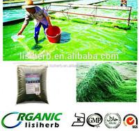 100% food grade organic Spirulina / Spirulina powder /spirulina tablets 250mg 500mg
