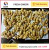 Chinese bulk fresh ginger with price