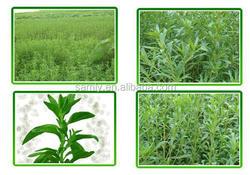 High quality hot sale Organic Steviol Glycosides RA99