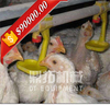 Automatic feeding equipment A type battery cages poultry equipment