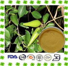 Diabetes Treatment Gymnema Sylvestre Extract