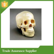 Life Size Wholesale Resin Human Skulls