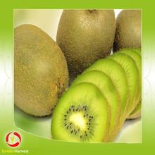 Hot selling chinese kiwi fruit dried Kiwi Dried sliced kiwi fruit