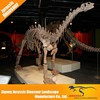 Educational science museum customized colored dinosaur skeleton