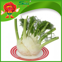 Wholesale Chinese Fennel Root