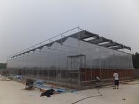 Agriculture UV Plastic Sheets Multi-span Vegetable Greenhouse Rain Gutter