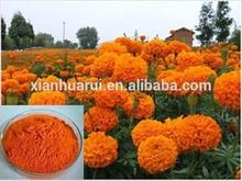 100% natural zeaxantina extraído de caléndula