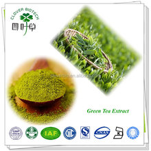 Catechins 80% Factory Supply Organic Green Tea Extract