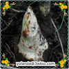 Effective Sarsaparilla Root Extract ( Ecuadorian Sarsaparilla )