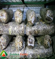 wholesale bulk supply market price for shiitake mushroom cultivation farm