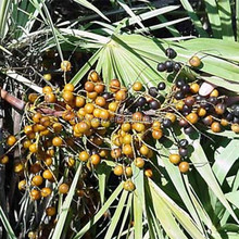 Hot Sale natural Saw Palmetto extract 25% 45% fatty acid