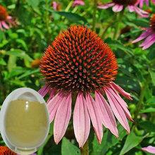 free sample echinacea purpurea extract in bulk