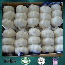 wholesale garlic price with specifications