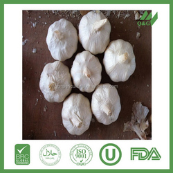 Green agricultural product fresh garlic