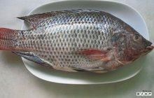 high quality 100-200g whole round tilapia