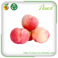 China Fresh and Delicious Peaches/Nectarine