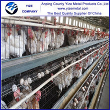 Hot sale day old chicks for sale /egg laying chickens cage (manufacturer)