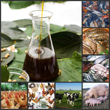 HXY-1S nature emulsifier active ingredient soya lecithin (CAS:8002-43-5)