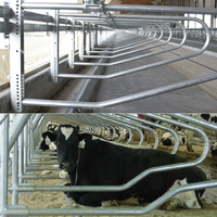 Farm livestock equipment for cow loops cow cubicle