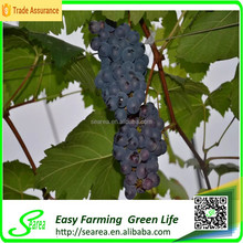 Grape growing agriculture green house for sale
