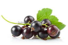 Suppliers Black Currant Seed Oil