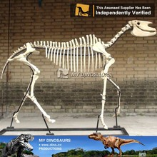 MY-DINO animal skeleton fossils replica for sale