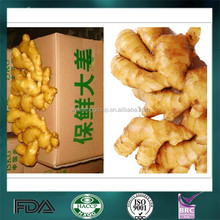 Chinese Factory Suppling 2015 New Crop Fresh Ginger with a Best Price
