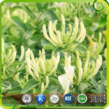 Lonicera Japonica Honeysuckle flower Extract Top Quality Chlorogenic acid 98%,Honeysuckle Chlorogenic acid,Honeysuckle Flower