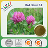 China manufacturer supply free sample high quality red clover extract trifolium pratense herb extracts