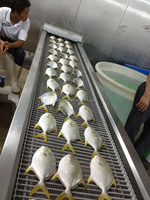 golden pomfret fish processing factory