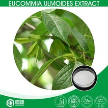 Manufacture Direct Supply Natural Raw Material Eucommia Bark Extract