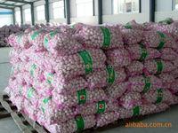 garlic peeled