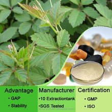 High quality Chinese herb medicine 100% pure natural gynostemma pentaphylla p.e.