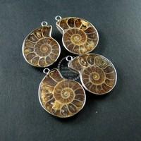 20-30mm sea snail Ammonite in pair rhodium brass frame pendant charm DIY supplies 1820207