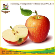 fresh Red Fuji Apple Fruit wholesale