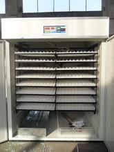 Focus group 2000 eggs incubator egg trays