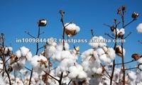 Eco Friendly Raw Cotton