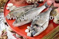 fresh farmed seafood