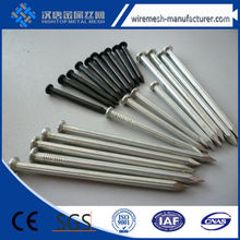 polished&galvanized common nail/wire nails/steel nails