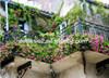 DElite Organic 400G/Bottle Diatomite Earth Organic Fertilizer For Garden